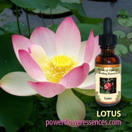 lotus_flower_essence