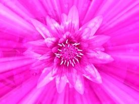 pink-flower-divine-love-hearts