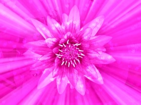 pink-flower-divine-love-hearts